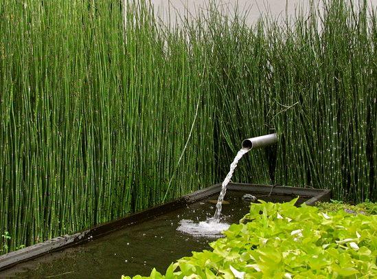 Bamb nel tuo giardino scopri come coltivarlo immobil for Vendita bambu